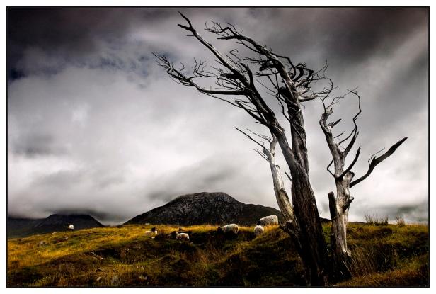 bernies photography flickr dead tree